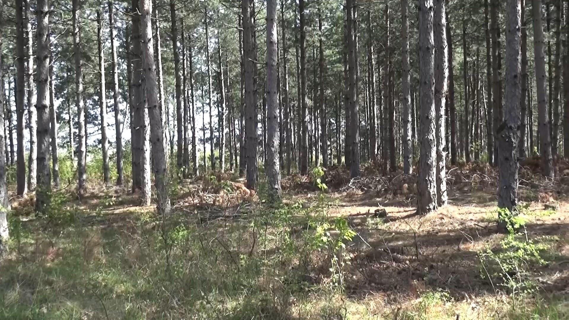 Изкупуват частни гори от гражданите . Взимат терени до 50 дка
