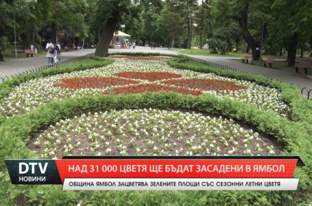 Десетки хиляди цветя ще бъдат засадени в Ямбол