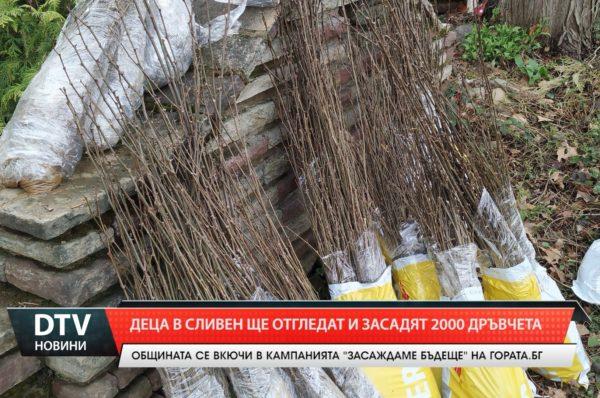 Деца ще засадят 2000 дръвчета в Сливен