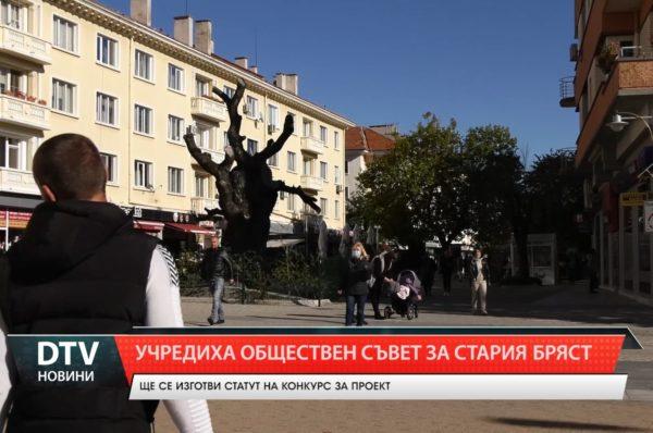 Учредиха Обществен съвет за Стария бряст в  Сливен