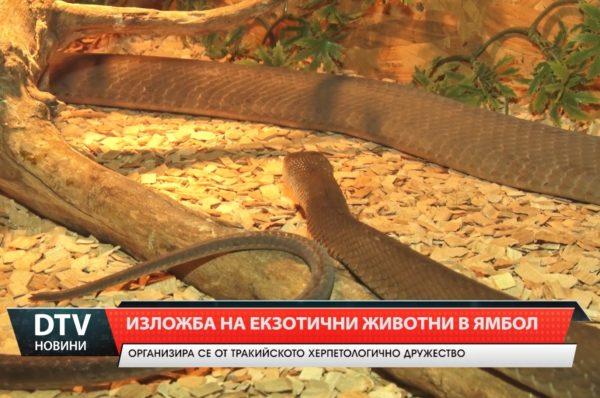 Изложба на екзотични животни в младежки дом-Ямбол